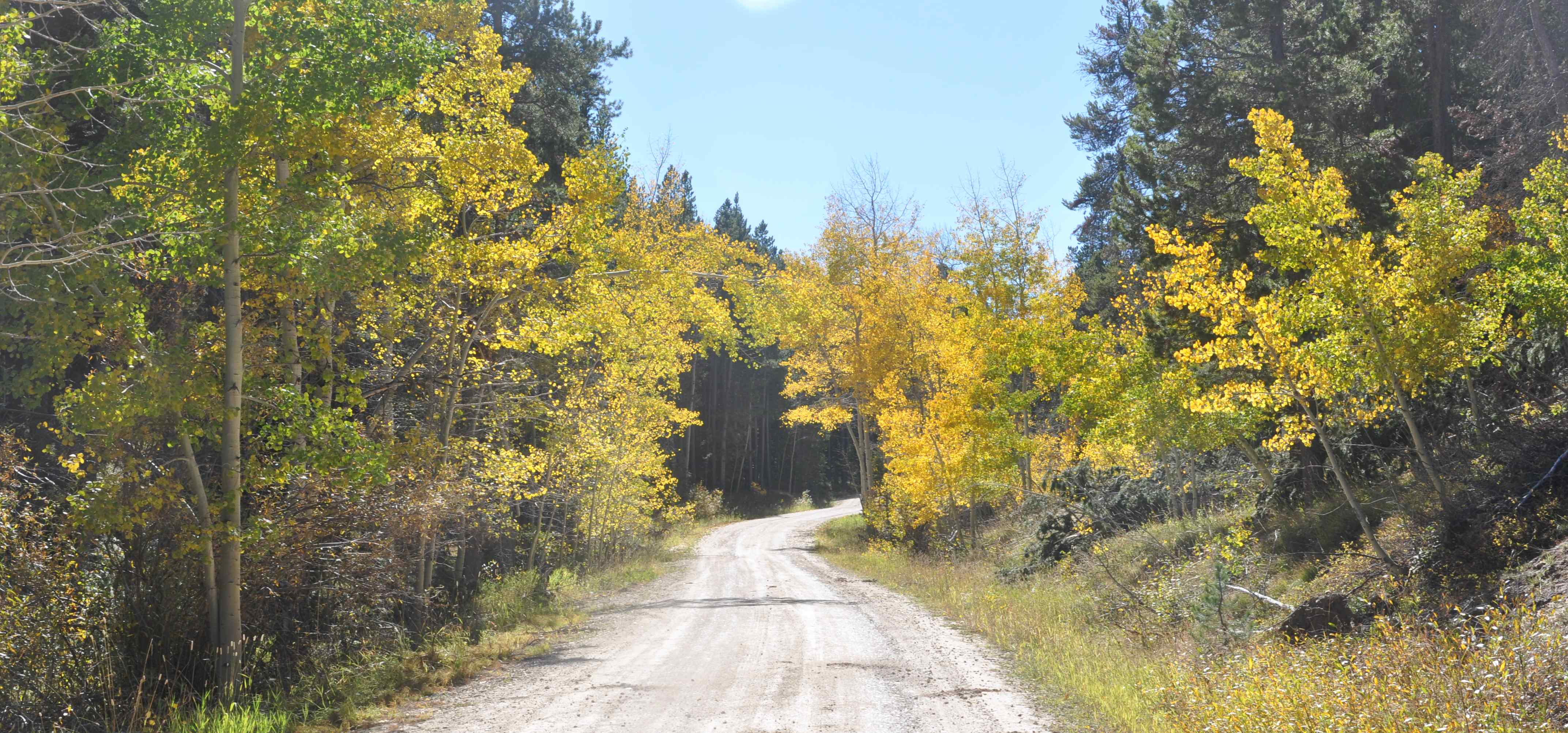 Dirt road with fall colors on both sides