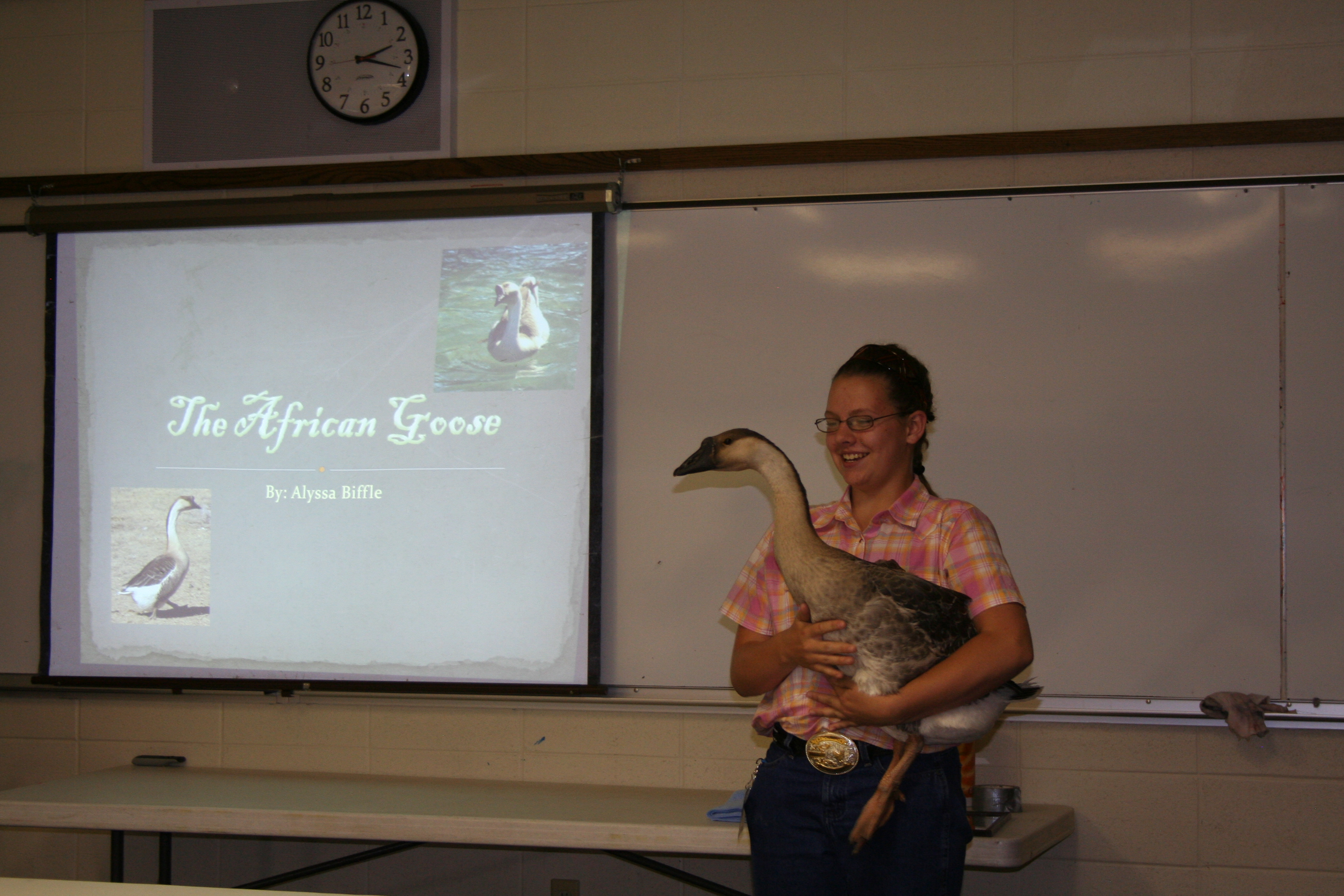 Young girl holding a goose.