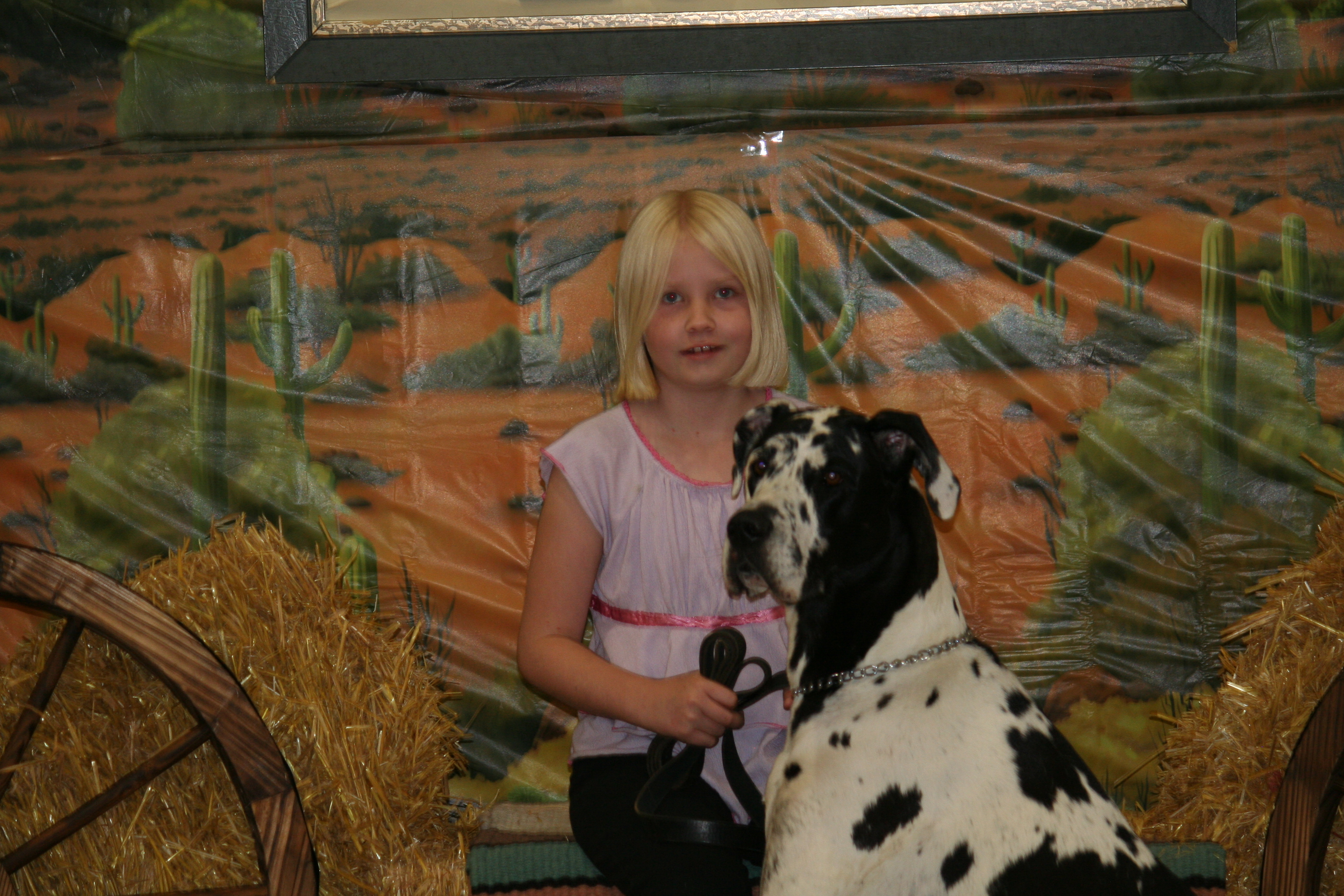 Young girl with black and white large dog.