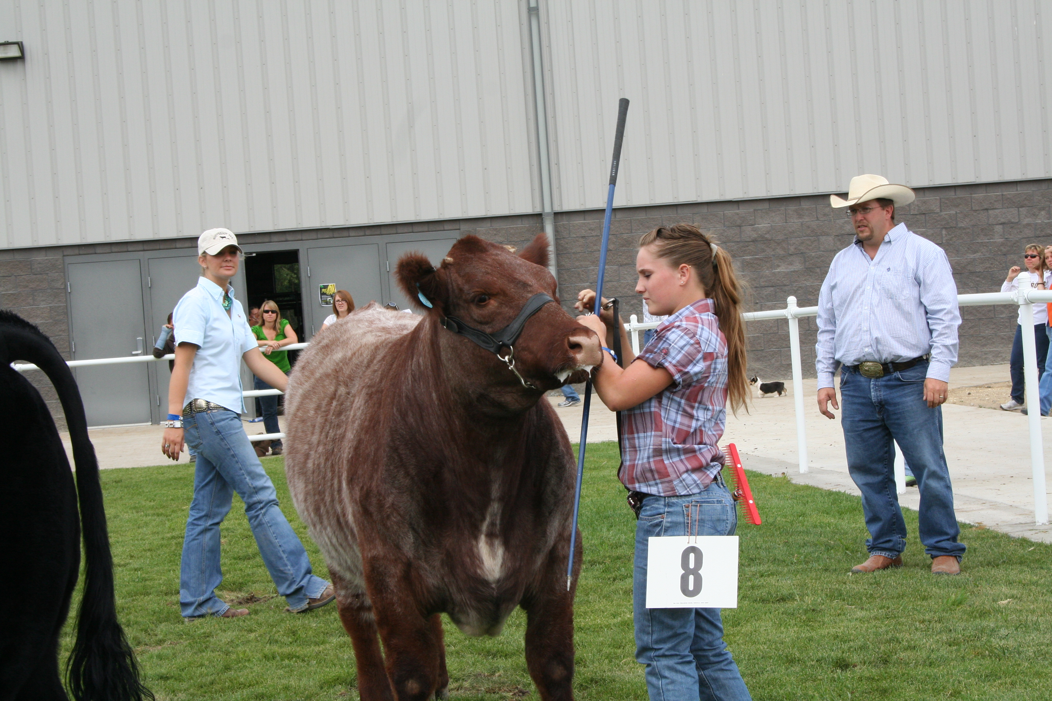 Young girl with a steer.